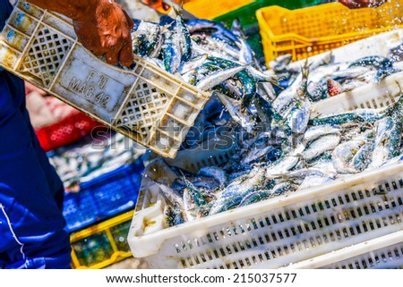 Fisherman pouring freshly cought fish from one container into another - stock photo