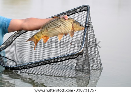 Fisherman using  dip net for freshwater fishing catching on pond closeup male hand holding one big fish on natural gray water background, horizontal picture  - stock photo