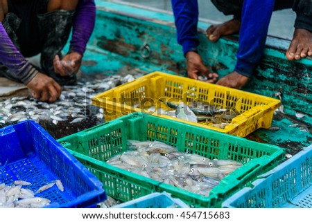 Fishermen sorting fish and squid in basket on boat. - stock photo