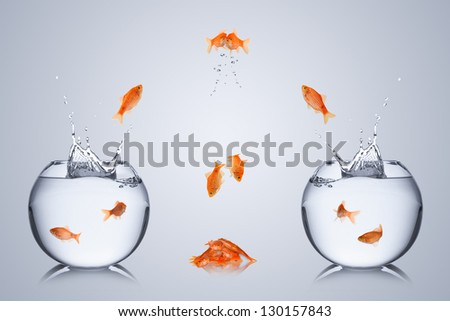 fishes fail to change bowl  and collide in the air - stock photo