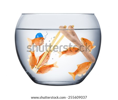 fishes in a slingshot teamwork concept - stock photo