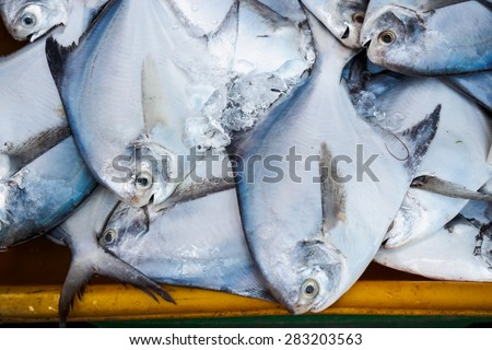 Fishes in fresh seafood market - stock photo