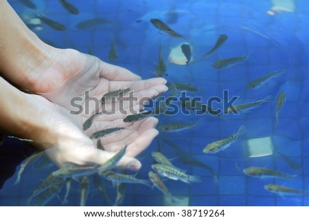 Fishes in Hands - stock photo