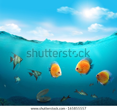 Fishes in the tropical sea. - stock photo