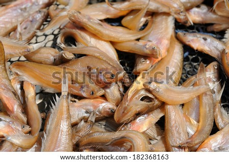 Fishes salted for food conservation - stock photo