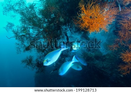 Fishes school and colorful coral under water, marine life.  - stock photo