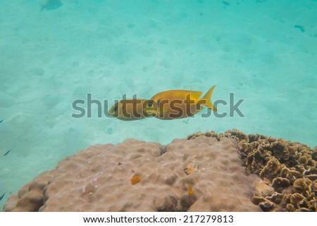 Fishes underwater - stock photo
