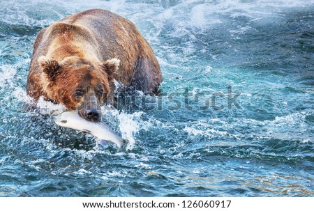 fishing bear in Alaska - stock photo