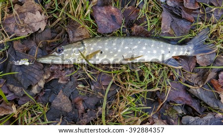 how to catch big northern pike in the summer