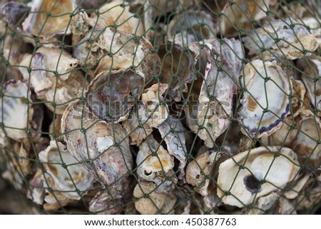 Fishing net with shell.  - stock photo