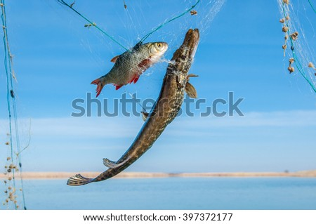 fishing nets with fish - stock photo