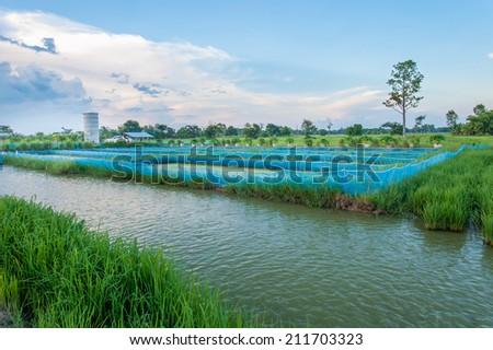 Fishing on lake - stock photo