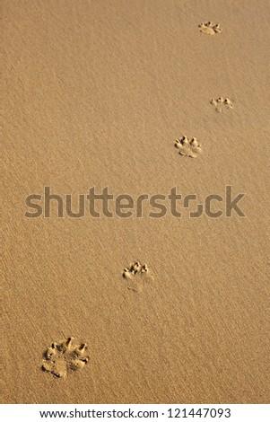 Five dog prints on smooth sand - stock photo