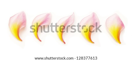five frangipani flower petals isolated on white - stock photo