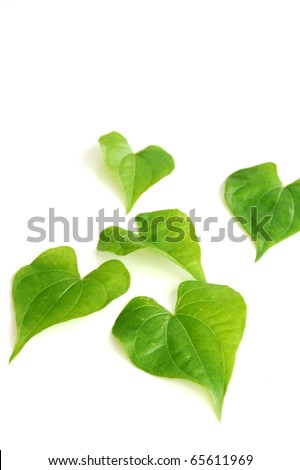 five green leaves - stock photo
