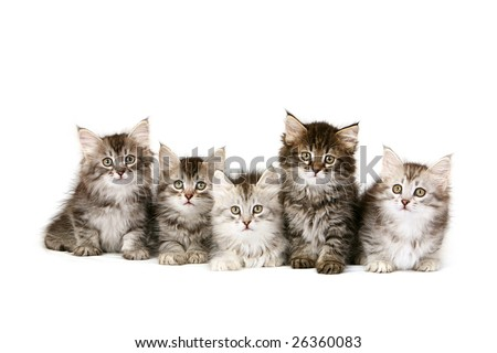 Five kittens sitting in a row - stock photo