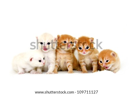 Five kittens sitting in a row, isolated on white - stock photo
