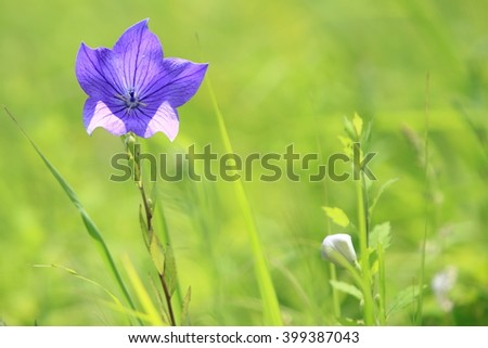 Five-pointed star in the meadow - stock photo