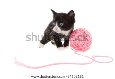 five week old kitten playing with a ball of string - stock photo