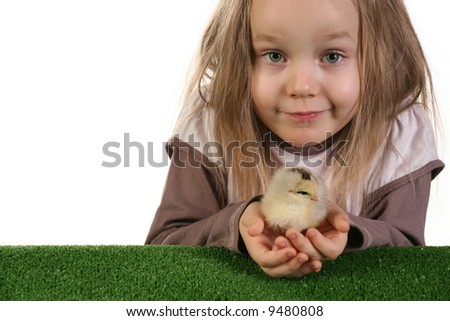 Five years old girl playing with baby chicken over white background - studio shot. - stock photo