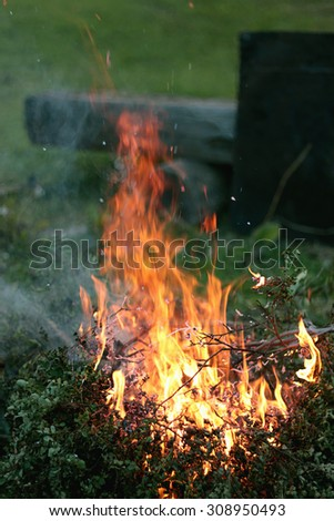 flames of fire burning bush - stock photo