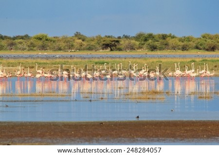 Flamingo - African Wild Bird Background - Colorful Nature and Magical Moments - stock photo