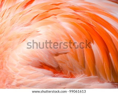 Flamingo wing abstract background - stock photo