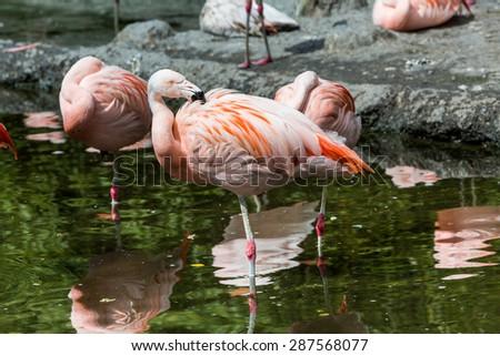 Flamingos in Zoo Zurich, Switzerland - stock photo