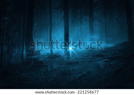 Flash in the night. Landscape. Mystery forrest.  - stock photo