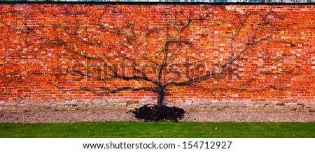 Flat tree on a red brickstone wall - stock photo
