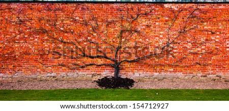 Flat tree on a red brickstone wall - stock photo