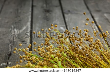Flax crop - bunch with ripe seed pods  - stock photo