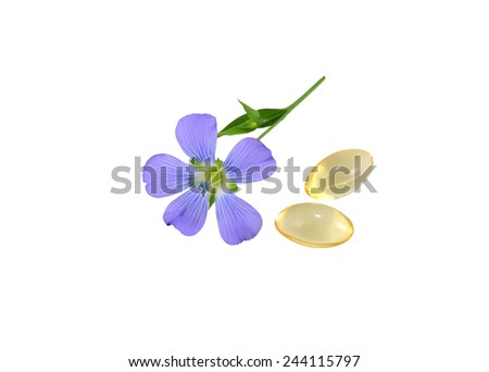 Flax Flower and capsules - stock photo