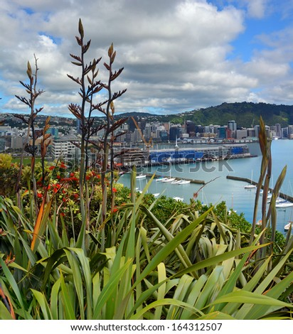Flax Flowers & Early Pohutukawa bloom in Oriental Bay with Wellington city & harbour in the background. - stock photo