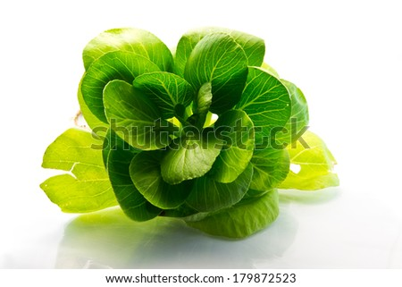 fleshy spinach leaves on the white background - stock photo