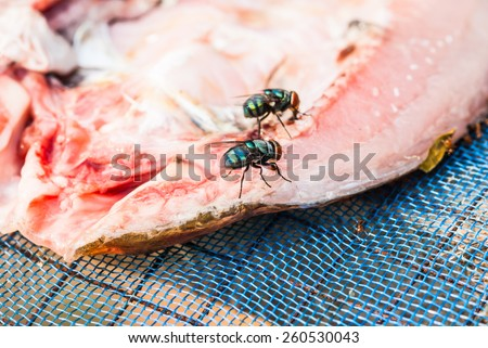 Food Contamination Stock Photos, Images, & Pictures ...