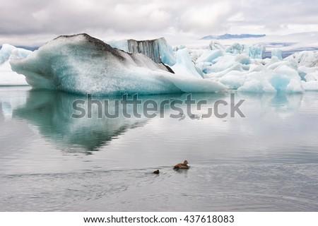 Floating icebergs at ice lagoon Jokulsarlon, Iceland - stock photo