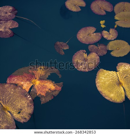 Floating lotus leaves on the water bed. An abstract nature background. - stock photo
