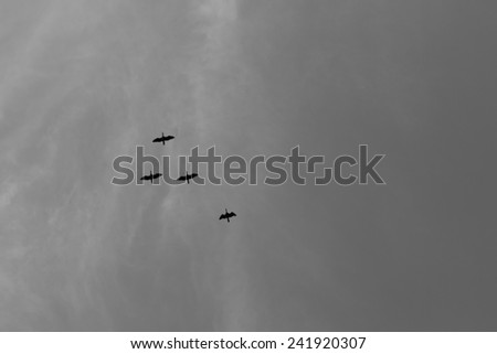 Flock of bird fly high, black and white photo - stock photo