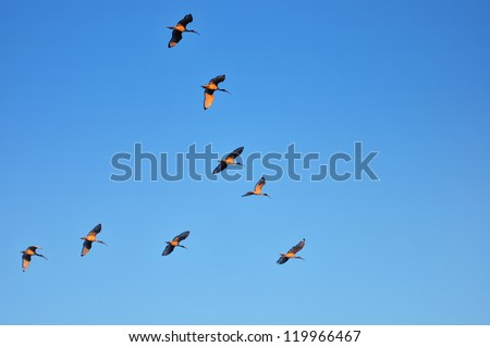 Flock Of Birds - stock photo