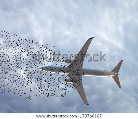 flock of birds and aircraft - stock photo