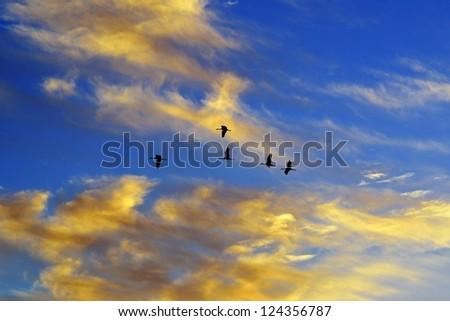 Flock of birds flying in beautiful sunset sky - stock photo