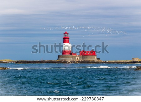 Flock of birds flying over a lighthouse. - stock photo