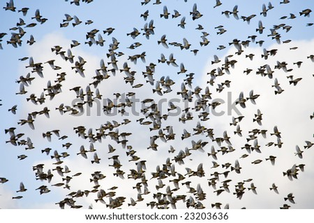 Flock of birds gathering before migration - stock photo