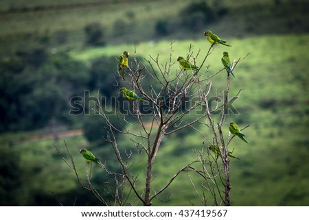 flock of birds in Canastra Mountains, Brazil - stock photo