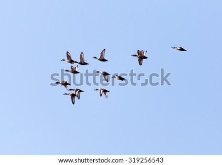 flock of birds in the sky - stock photo