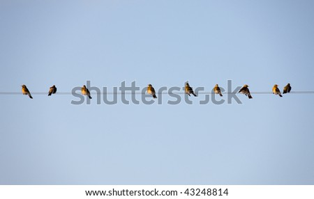 flock of birds on wires in winter day - stock photo