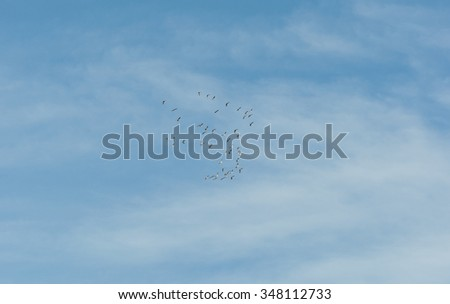 Flock of Common Crane, Grus grus, flying over La Mancha, Spain, during their winter migration. It is the only crane commonly found in Europe besides the Demoiselle Crane - stock photo