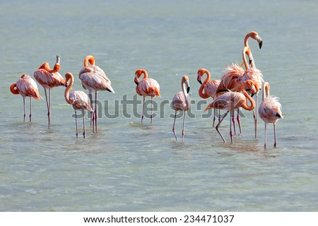Flock of Flamingos at Jan Kok salt lake - stock photo