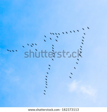 Flock of Geese flies in V-formation flying in blue spring sky - stock photo